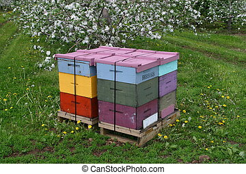 Colorful Hives - Honey Bee Hive with Apple Blossoms,...