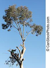 à, grande, albero, essendo, taglio, giù, uomo,...