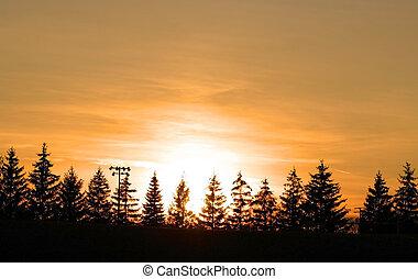 Sun Set - Christmas trees and sun set with colorful sky