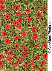 Memorial Poppys - Memorial poppys on grass, Windsor, Nova...
