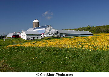 Farm field - Early spring growth, at rural farm, Nova Scotia