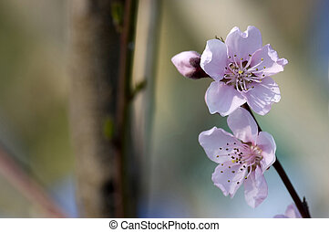 spring blossom - spring, blossom on colorful background