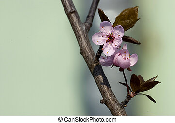 spring blossom on branch - spring, blossom no branch, light...