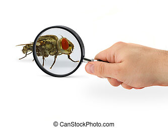 hand magnifying fly - hand magnifying home fly isolated on...