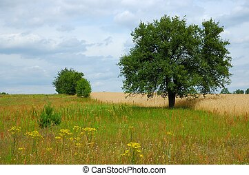 Summer Landscape - Trees, meadow and sky with clouds
