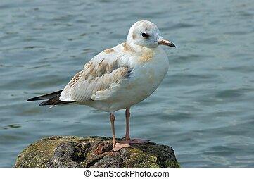 Seagull on a breakwater