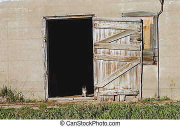 Kitty in the doorway of a barn