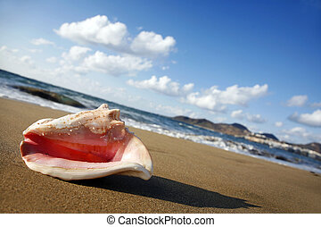 Sunset Conch - Queen conch on the shore of golden beach at...