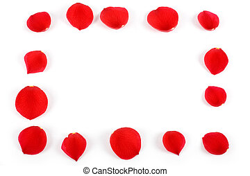 rose petals - red rose petals in white background, love...