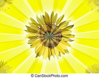 Sunflowers - A sunflower background with rays and light