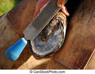 hoof - shoe\\\\\\\'s horse and hoof