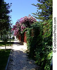 Beautiful Hedge, Olhao - This glorious flowering bush...