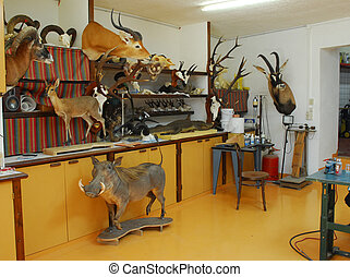 shop of taxidermy