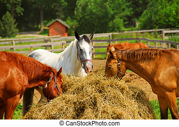 Horses at the ranch - Several horses feeding at the runch on...