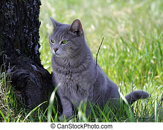 Gray Cat - Portrait of a gray cat sitting next to a tree in...