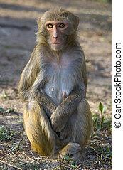 Wild Monkey - A wild monkey in Jiangsu Provence, China
