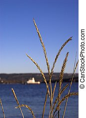 Grass by the Fjord - Grass straws framing a blured image of...