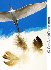 Birds of a feathers - Snowy Egret, Egretta thule, in flight...