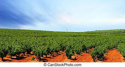Barossa Vineyard - Vineyard with bright orange dirt