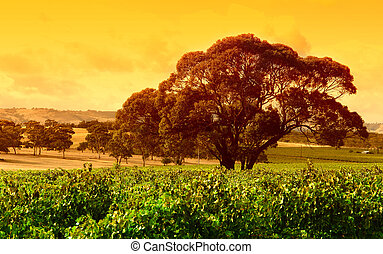 Big Tree Vineyard - Big tree sitting in middle of the...