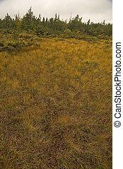 French Mountain Bog, Cape Breton Highlands National Park, Nova Scotia, Canada