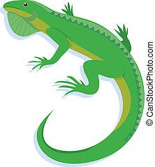 Iguana on a white background