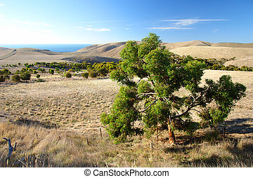 Gum Tree overlooking the Coastline at Rapid Bay, South...