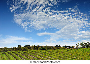 Australian Vineyard Landscape - Scenic Vineyard in South...