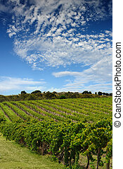Australian Vineyard Landscape - Beautiful Australian...