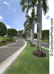 tropical roadway - tropical roadway, lined with palm trees,...