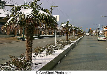 Snow covered palm trees, - Global warming: snow covered palm...