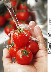 Washing Tomatoes - Washing tomatoes under the tap Focus is...