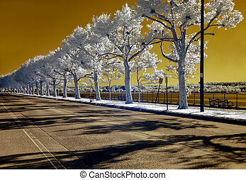 Deserted - Infrared image of a deserted, tree-lined street