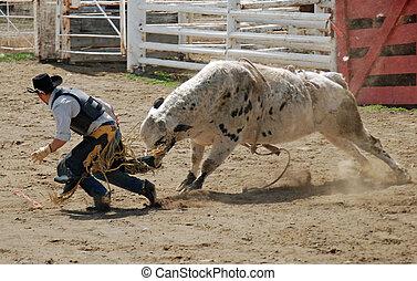 Bull getting cowboy