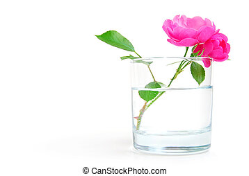 Purity - Rosehip flower in a glass of clear water, purity or...