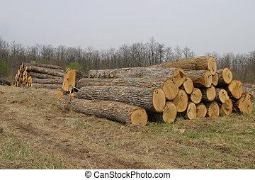 Sawmill - Wood sawmiil, the Black sea coast