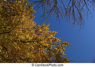 Autumn Colours - Vibrant yellow and red leaves against deep...