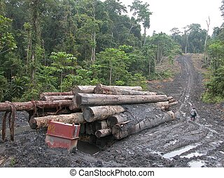 Illegal Logging - Illegally logged Merbau logs left on an...