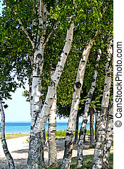 Trees on Lake shore