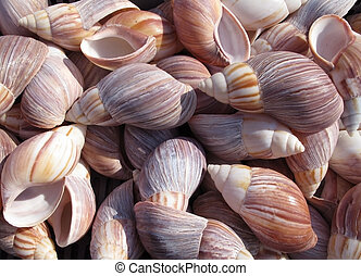 Sea Shells - a lot of colorful sea shell as background