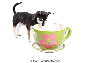 looking in cup - little dog looking in a big cup