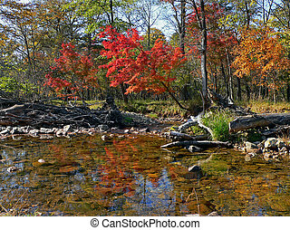 Woodsy River in Autumn - Small woodsy river. Autumn. In...