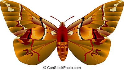 Moth - Colorful tropical moth