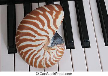 Chambered Nautilus Keys