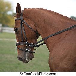 castaña, caballo,  Dressage