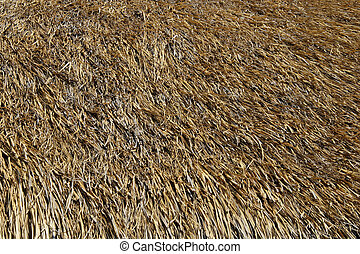 Thatched roof background