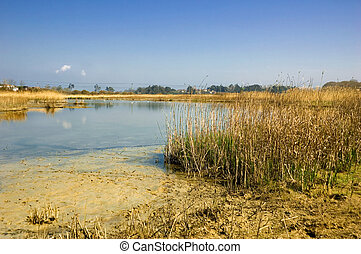 Peaceful River Estuary - Peaceful river estuary in...