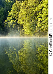 lake - lonely lake with mist in early morning