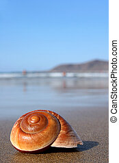 Seasnail - Lovely warm brown seashell on sunny beach