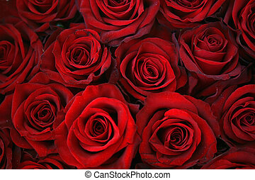 Roses - Red roses background - beautiful texture